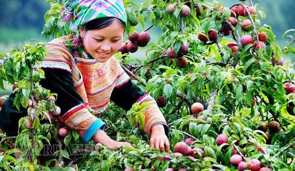 mùa hái quả