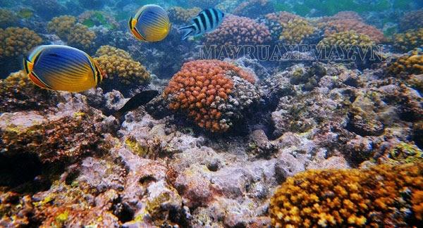 hệ sinh thái biển