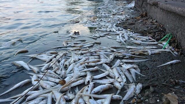 ô nhiễm nguồn nước đối với sinh vật sống