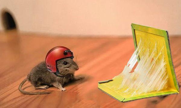Chia sẻ cách tẩy keo dính chuột trên sàn nhà hiệu quả, nhanh chóng nhất
